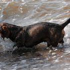 Der Wasser-Beißer!!!