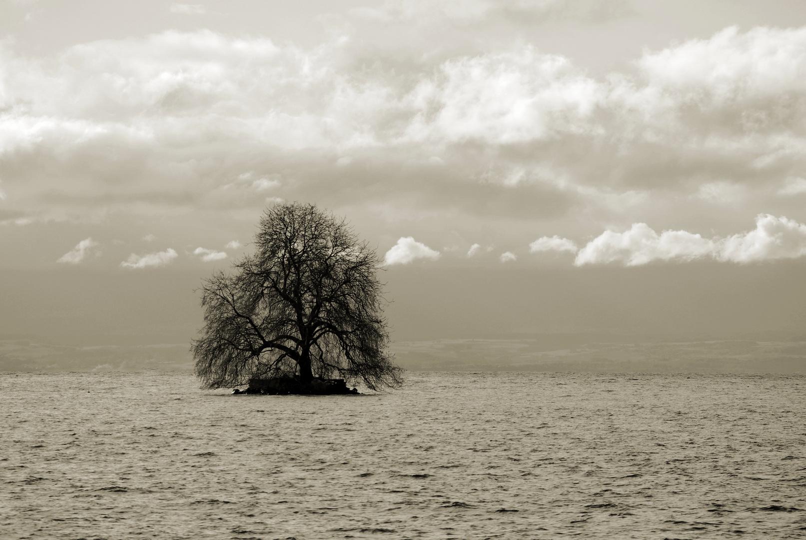 Der Wasserbaum
