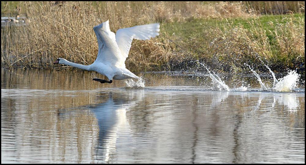 Der Wasserläufer !!!