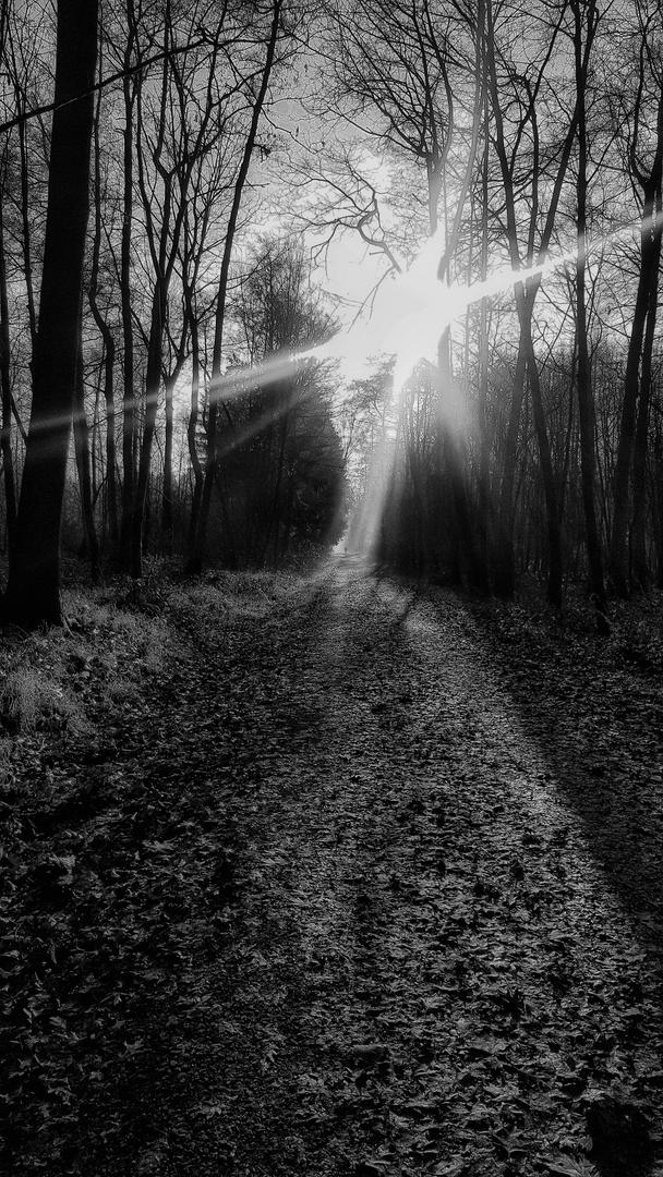 Der Weg (33) ........ dieser führt durch die Schluchter Heide