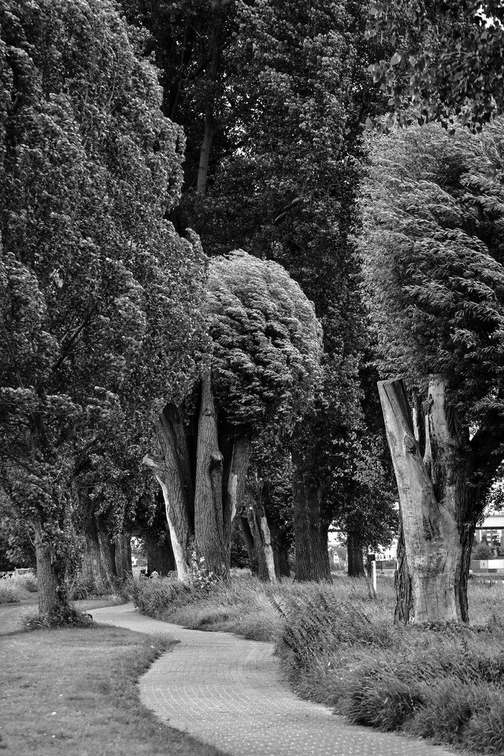 Der Weg (36)...... dieser führt in den Wind!