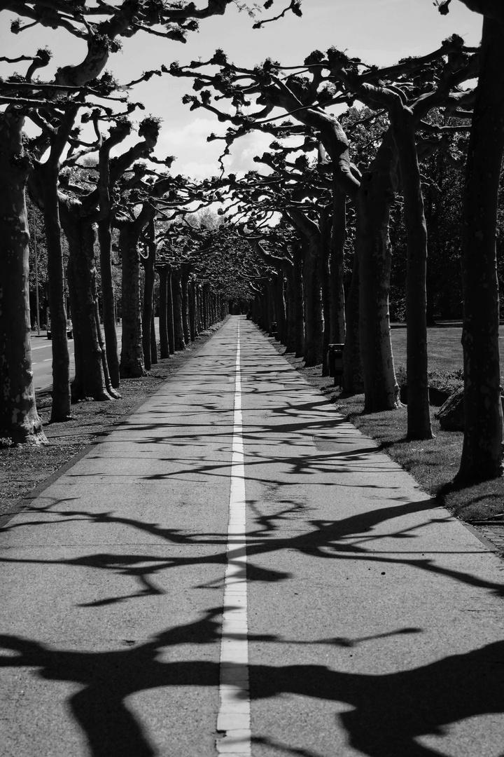 Der Weg (38)........ist ein Fahrradweg........ein sehr schöner!