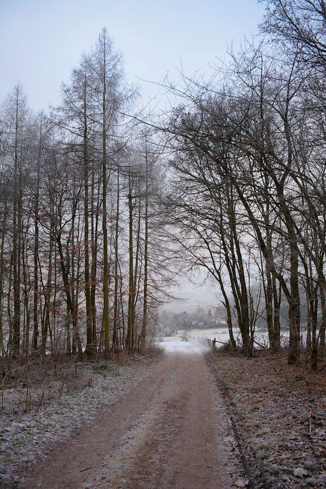 der Weg aus dem Wald...