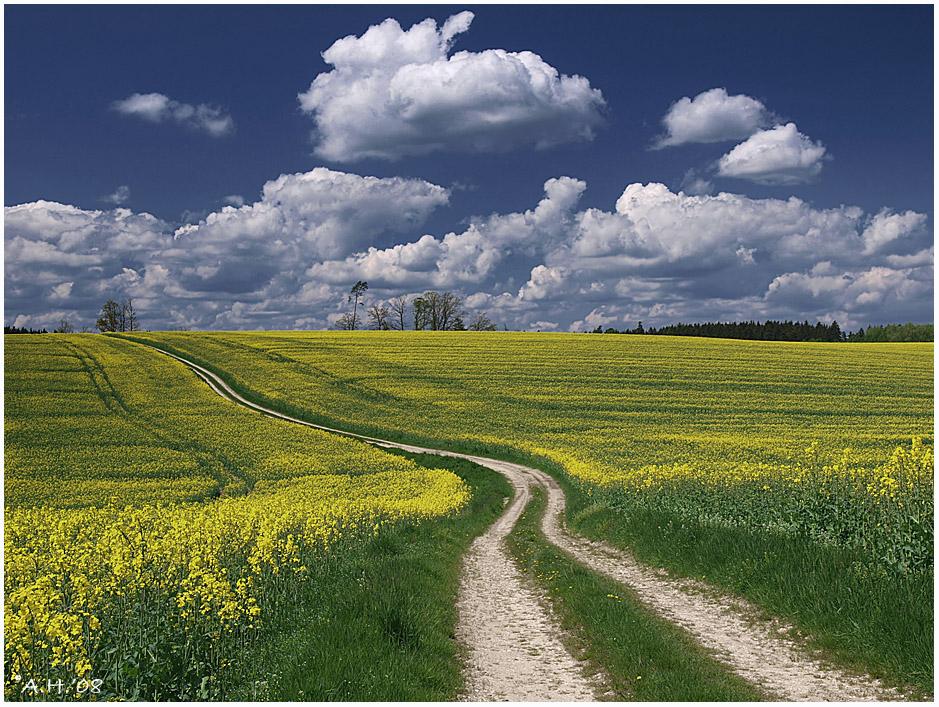 Der Weg durch das Rapsfeld (2008)