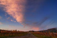 Der Weg durch den Weinberg