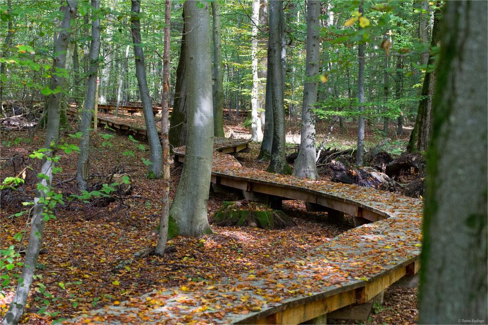 Der Weg im Wald....