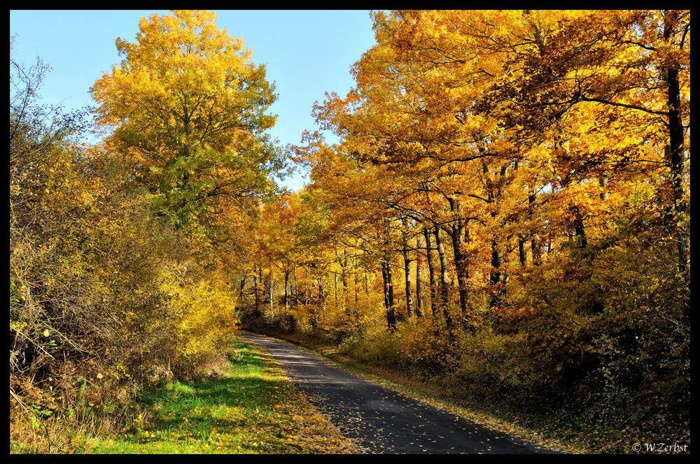 - Der Weg in den Herbst -