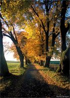 Der Weg in den Herbst_1