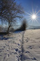 Der Weg in die Sonne,