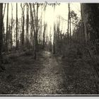 ...... der Weg ins Licht