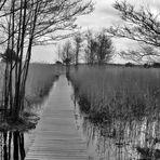 Der Weg ins Moor