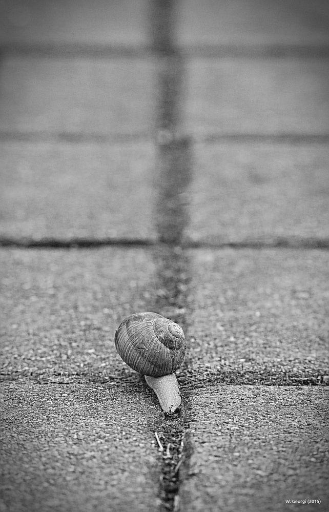 Der Weg ist das Ziel!