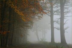 Der Weg nach Nebelheim
