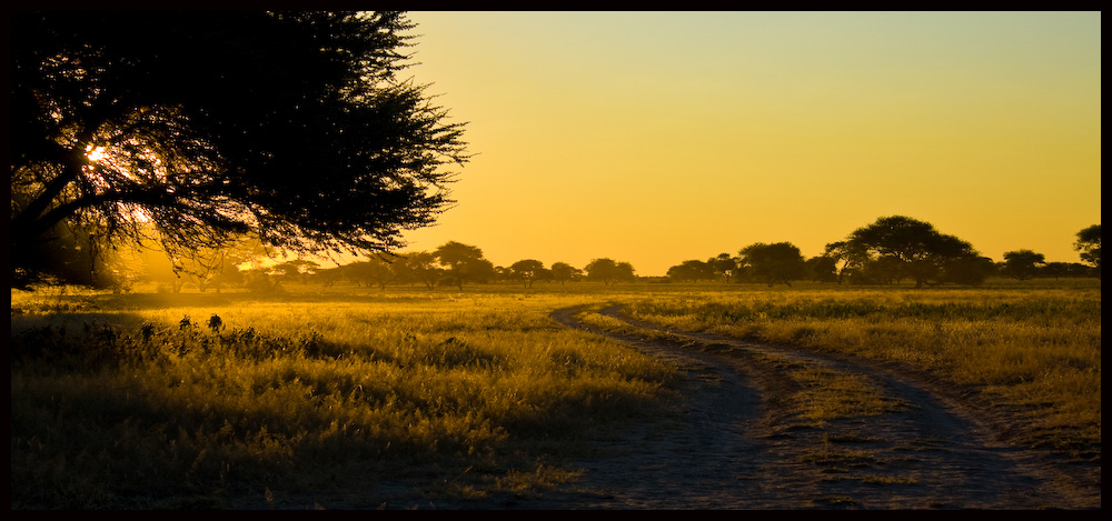 - Der Weg- Zentral Kalahari