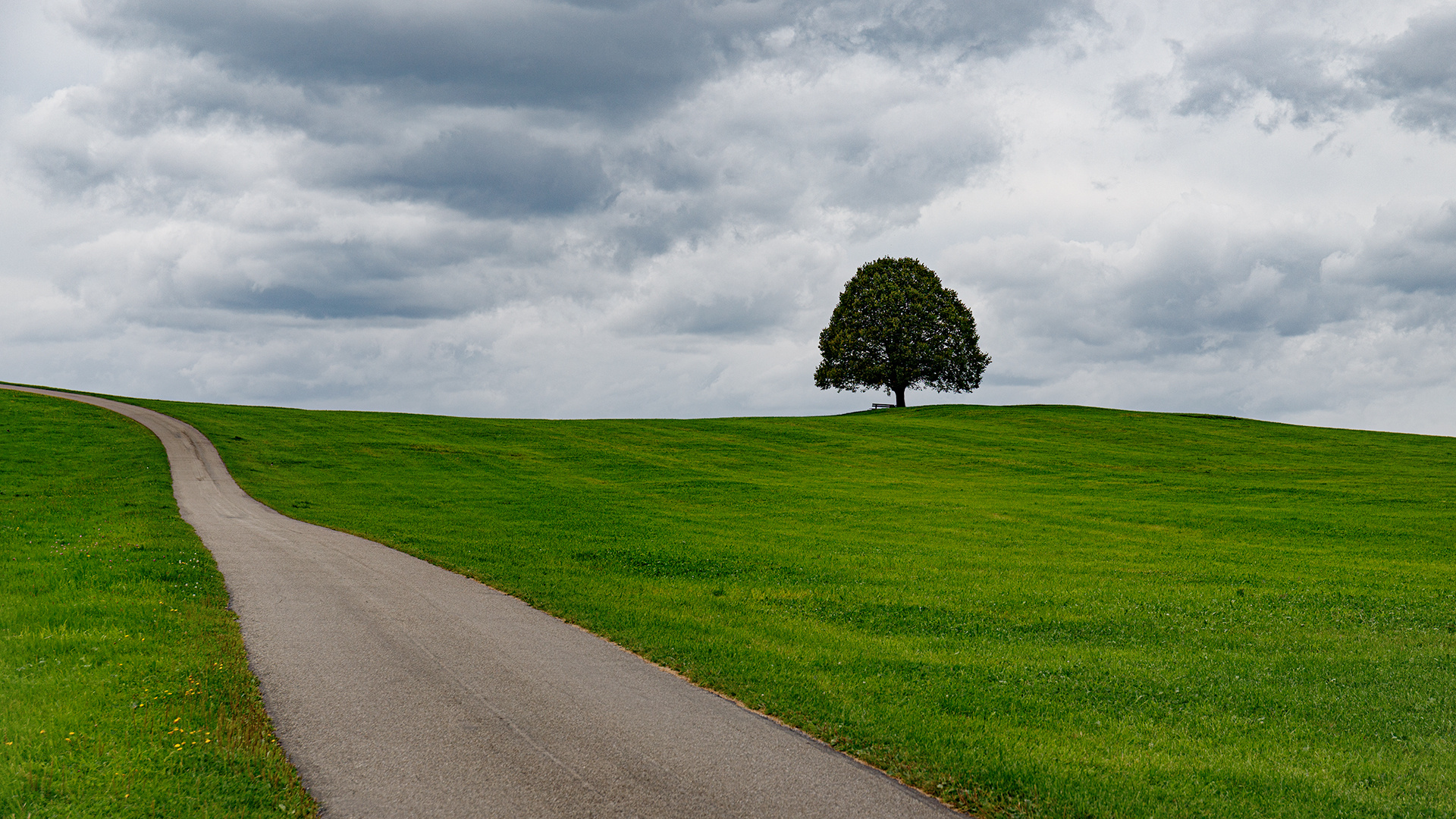 Der Weg zum Baum