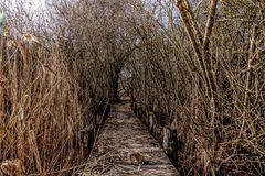 der Weg zum  Zauberwald