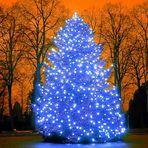 Der Weihnachtsbaum auf dem Pforzheimer Hauptfriedhof