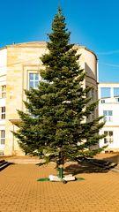 Der Weihnachtsbaum im Sonnenlicht