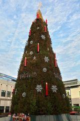der Weihnachtsbaum in Dortmund