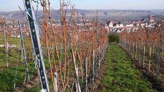 der Wein fürs Fest kommt vom Neckar bei Besigheim und den Felsengärten