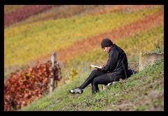Der WeinLeser