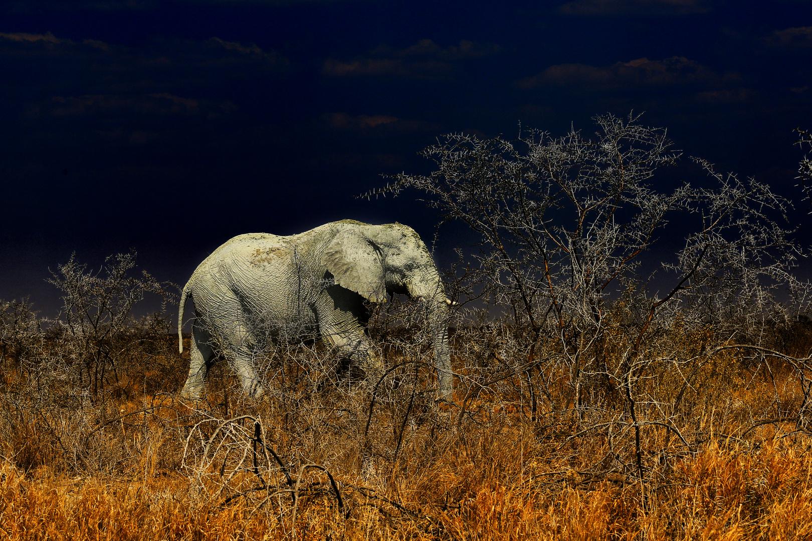 """Der """"weiße"""" Elefant"""