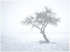Der weiße Nebel wunderbar