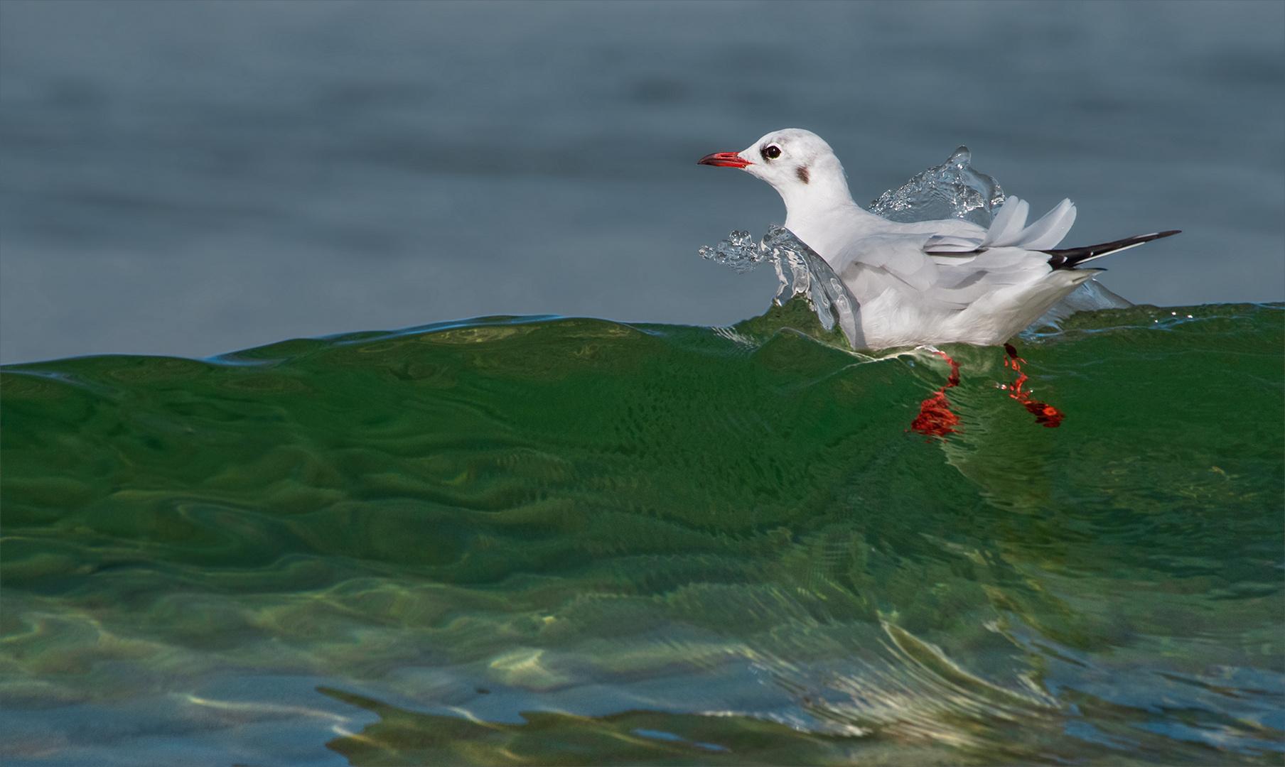 Der Wellenreiter
