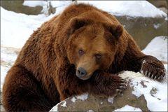 Der wilde Hüter vom Bärental [4] ...
