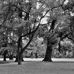 der Wind streicht durch die Bäume....