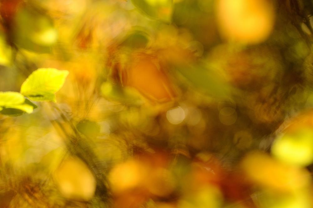 Der Wind war der Künstler, ich habe mal versucht bei Sturm ein Herbstbild...