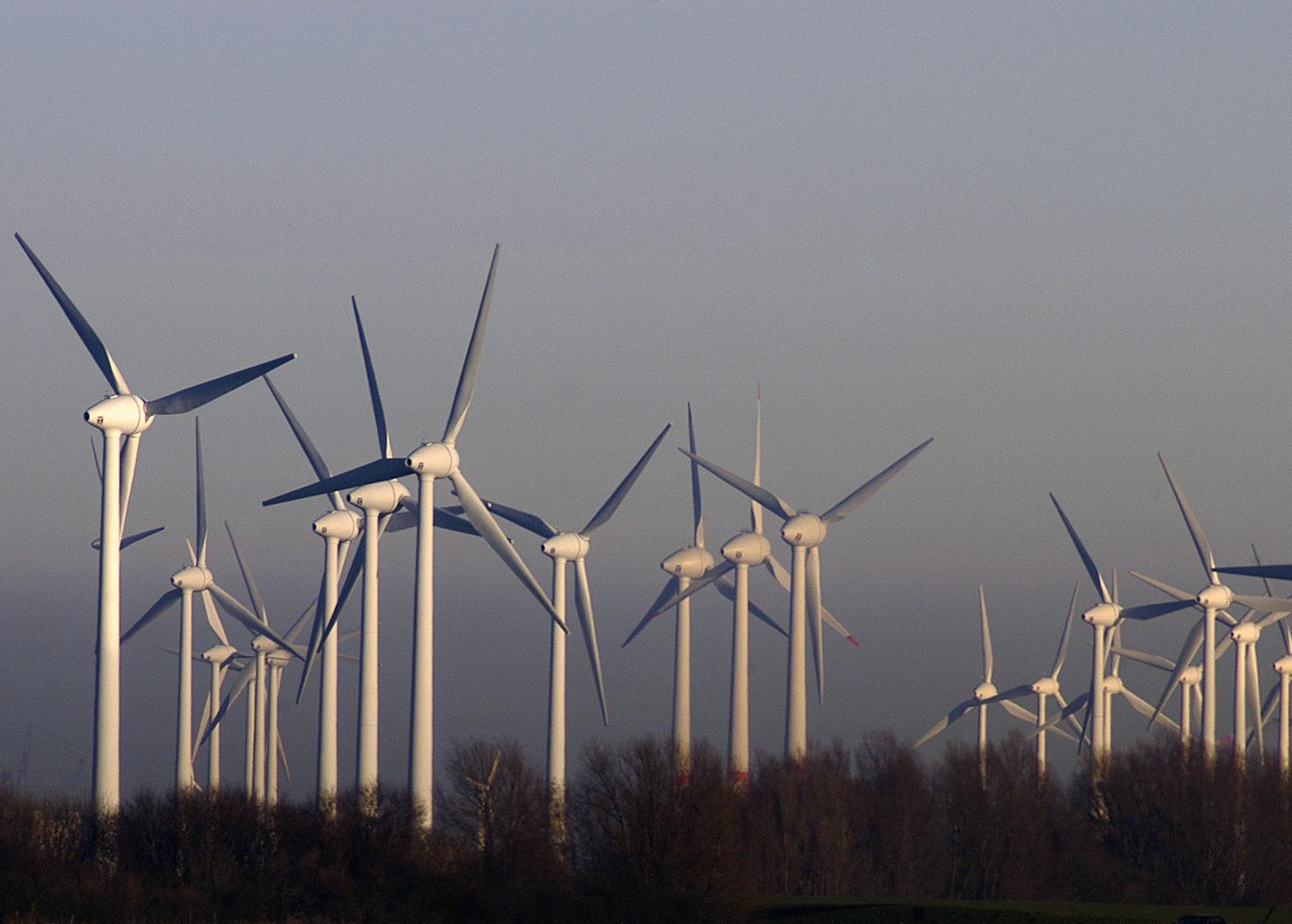 Der Windwald