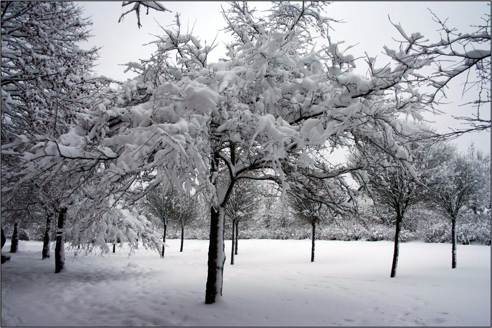 Der Winter 2010