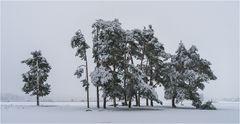 Der Winter ...