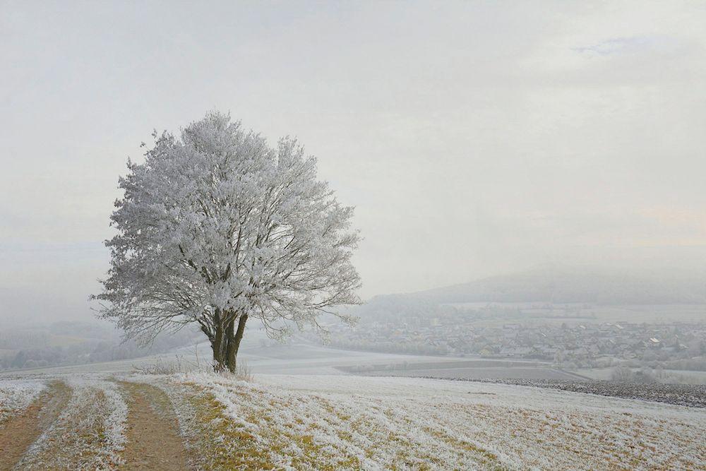 der Winter  .