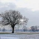 Der Winter geht ! ENDLICH !!!