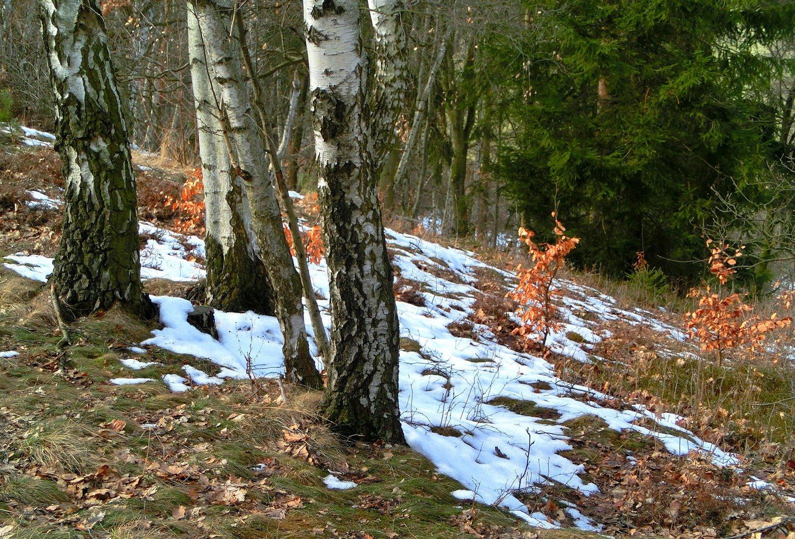 der winter h lt sich nicht mehr foto bild jahreszeiten fr hling natur bilder auf