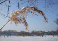 Der Winter hat auch schöne Tagen.