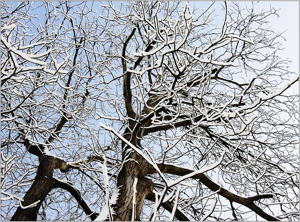 ... der Winter hat uns wieder ...