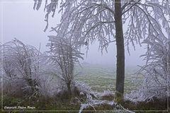 Der Winter ist in Wittgenstein angekommen 2
