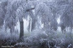 Der Winter ist in Wittgenstein angekommen