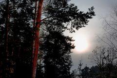 Der Winter ist lang...Endlich wieder ein Sonnenstrahl