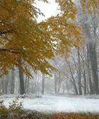 Der Winter kommt,..........