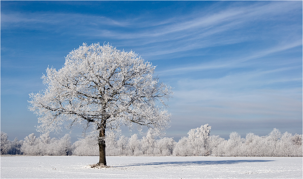 Winter Kommt