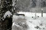 Der Winter ... nervt, weil ...