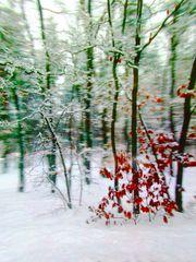 Der Winter rast