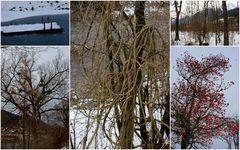 Der Winter zeigt Farbe...