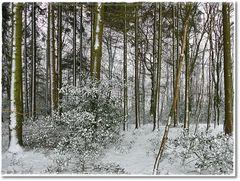 Der Winter zeigte nochmal,daß er noch nicht zu Ende ist....