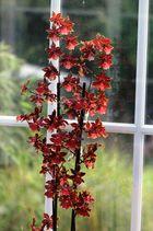 Der Wintergarten hat Zuwachs bekommen - eine neue Orchidee (1)