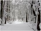 ...der winterwald...